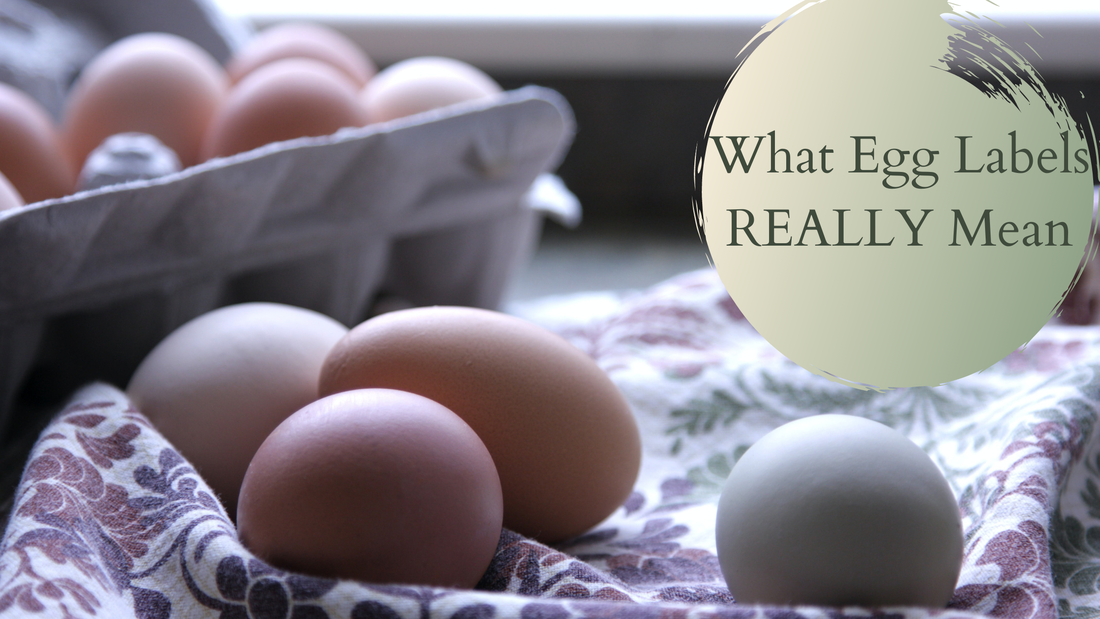 Willow Farm LLC Homer Michigan What Egg Labels Really Mean