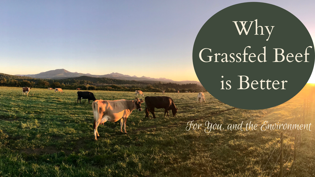 Why Grass fed beef is better Willow Farm LLC in Homer Michigan